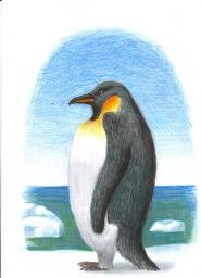 Um pinguim sobre um bloco de gêlo no mar